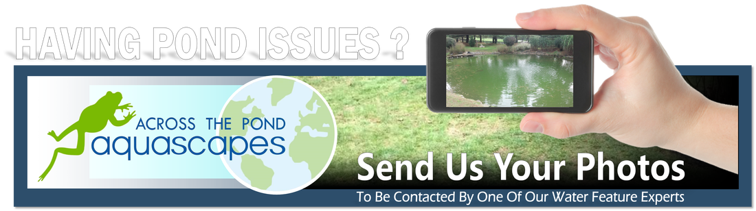 Pond & Water Garden Repair| - Across The Pond Aquascapes